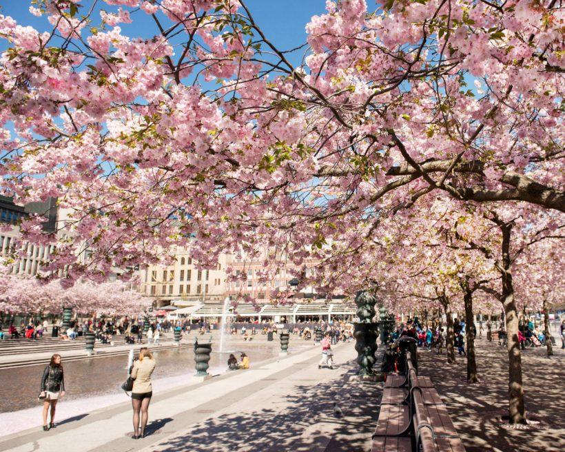 Seværdigheder i Stockholm: Det skal du opleve i den svenske hovedstad
