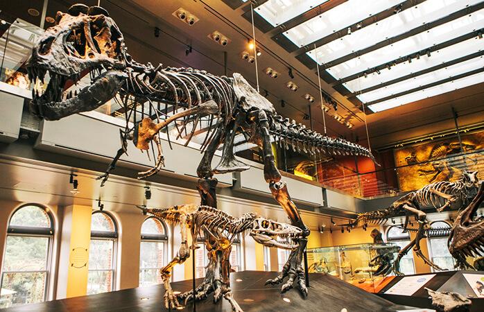 Dinosaurer venter på dig i National History Museum, L.A.
