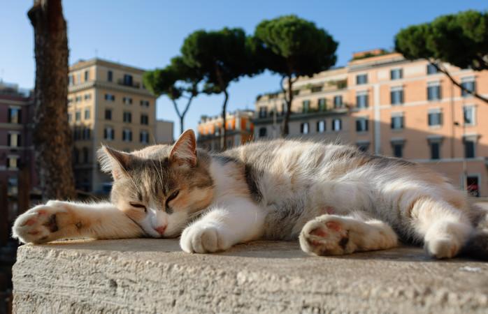 Udforsk de romerske ruiner i selskab af katte