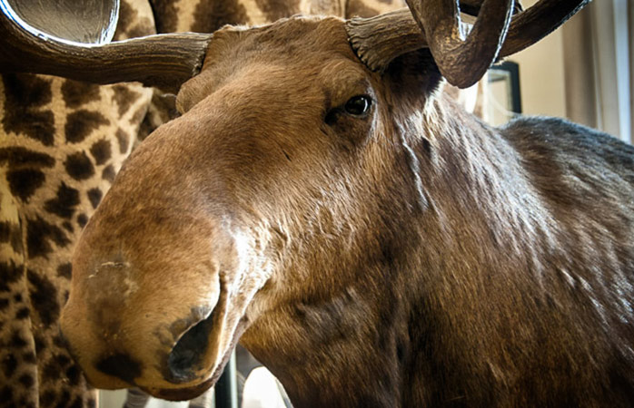 Zoologisk Museum i Rom