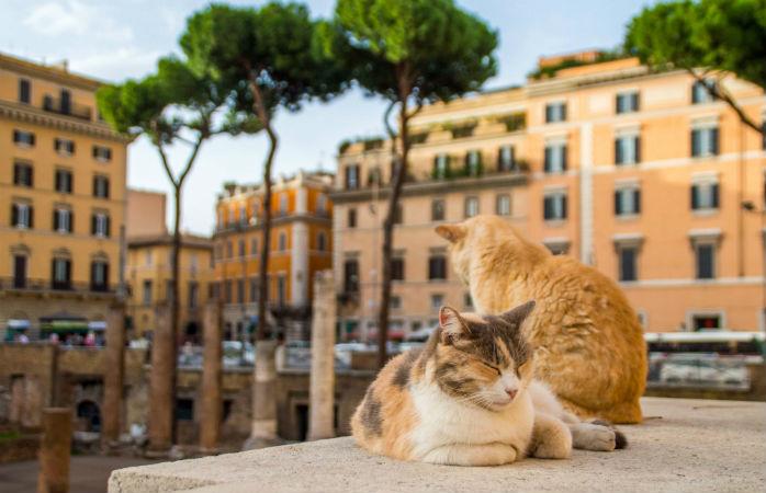 Kattene ved Torre Argentina - Seværdigheder i Rom