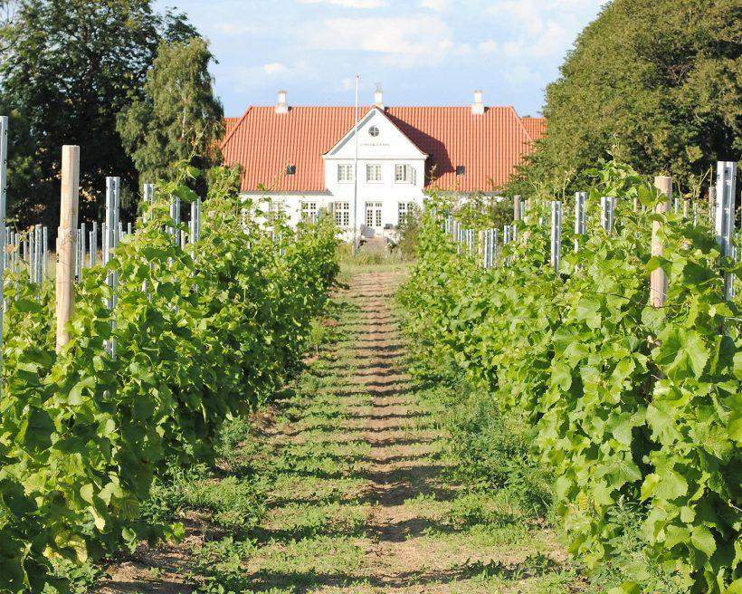Røsnæs: Danmarks Bordeaux